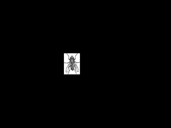 Flyscreen Man Logo