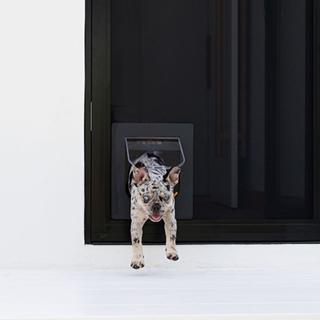 Pet doors working wonders in West Burleigh